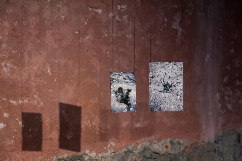 <p>Özgür Atlagan,<em>Sulfur Noon</em>, 2017 Photographs, Branches, Text</p>