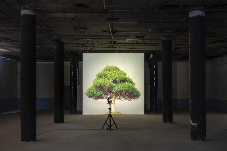<p>Ceal Floyer, <i>Aşırı Büyüme</i>, 2004. Orta format slayt ve orta format slayt projektör, değişken boyutlarda. Fotoğraf: Zeynep Fırat © Ceal Floyer. Lisson Gallery; Esther Schipper Gallery, Berlin; 303 Gallery, New York; Galleria Massimo Minini, Berscia izniyle. <em>Bir Zamanlar Kavranamayan </em>sergisi kapsamında, Protocinema, 2021</p>